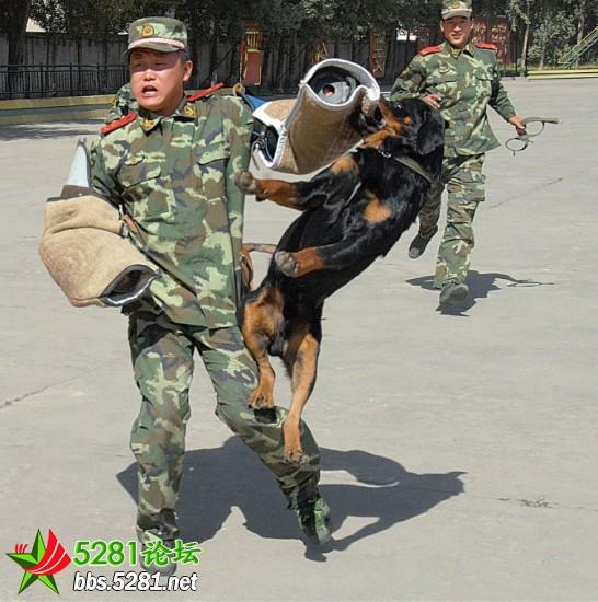 武警边防 兵哥的生活 新兵报到 心情随笔 5281士兵之恋 5281军人论坛 图片
