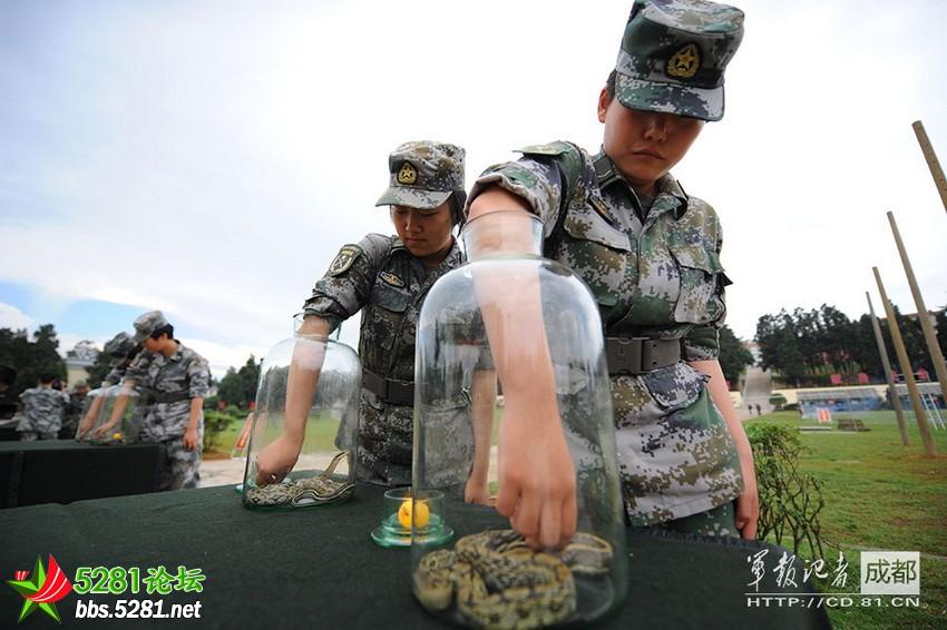 解放军女兵捉蛇进行野战心理训练